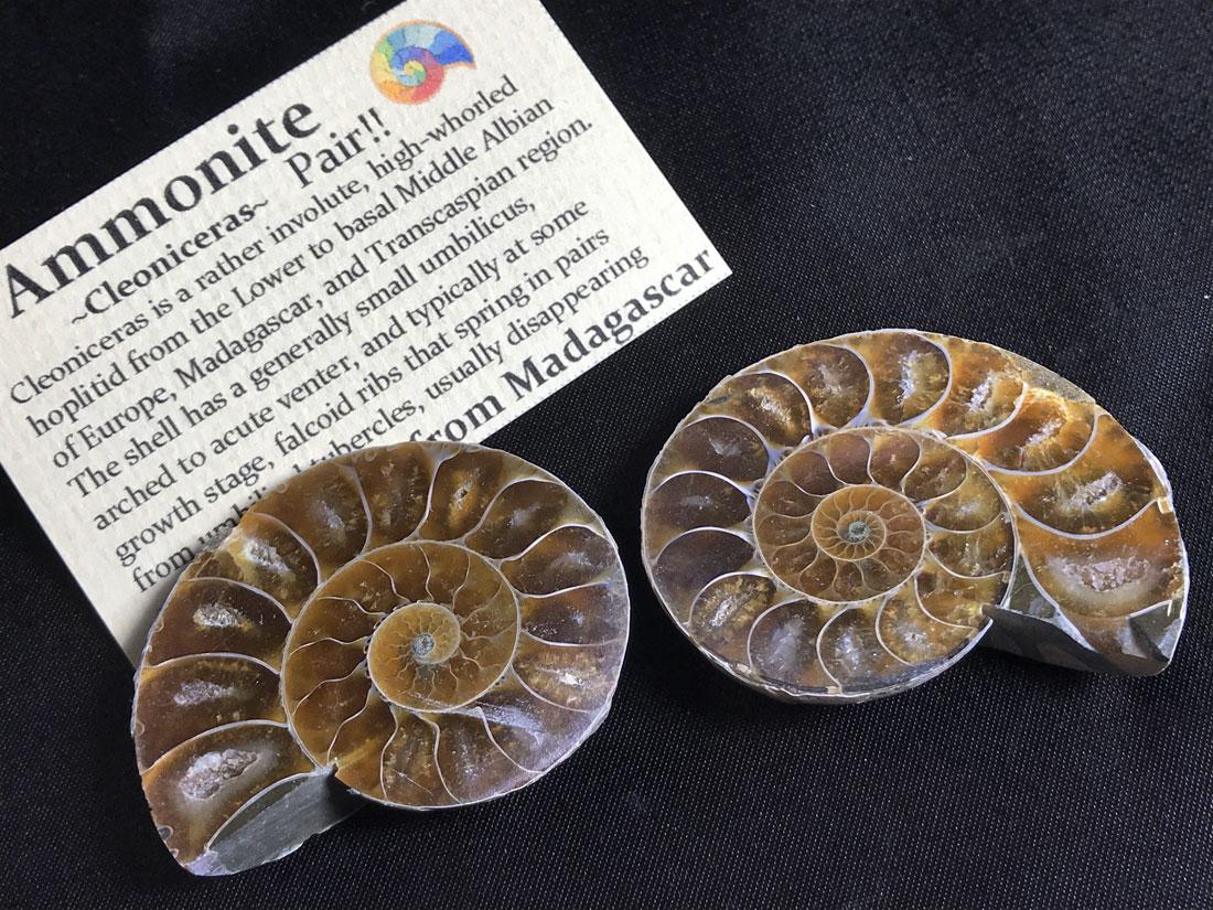 アンモナイト化石ペア