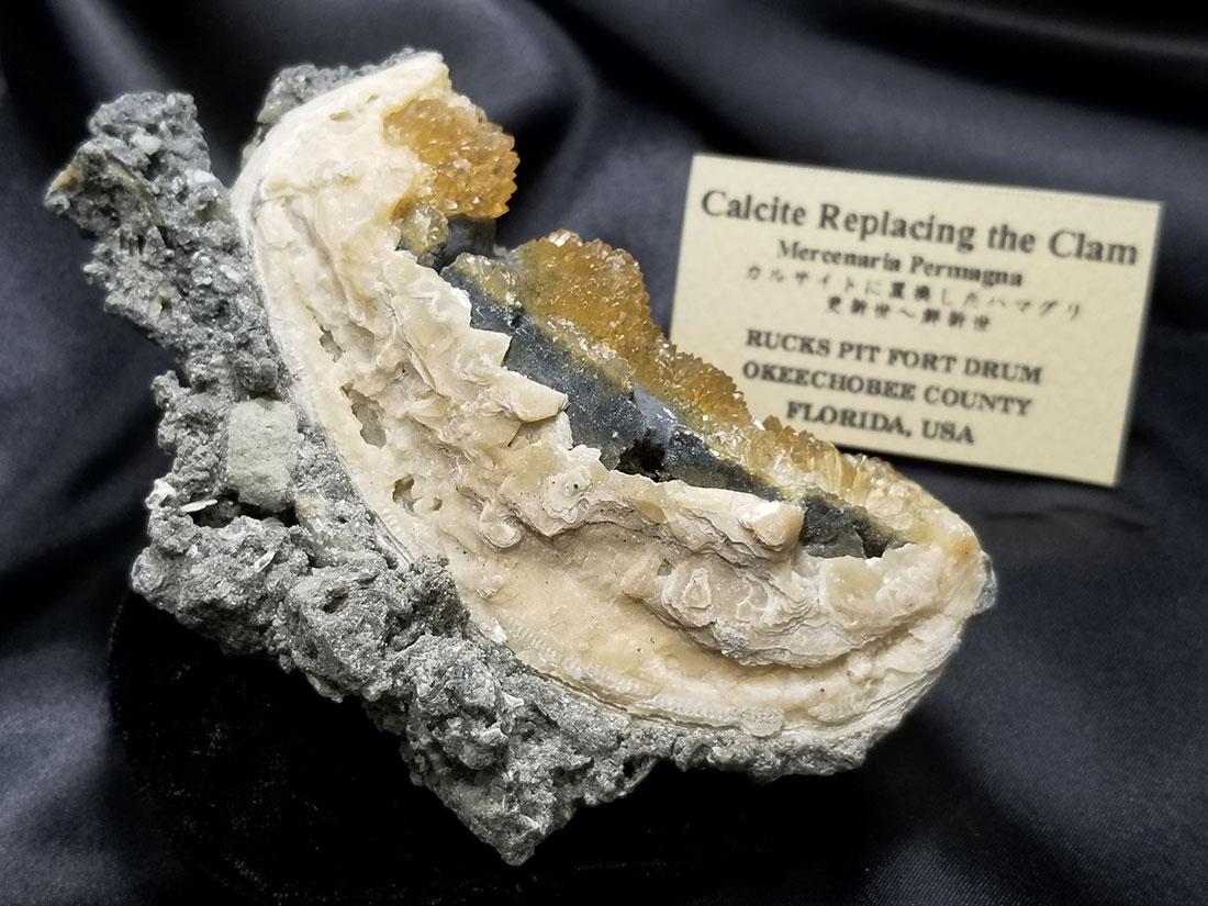 貝化石カルサイト